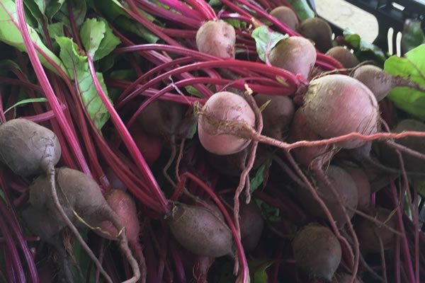 fall produce at mayflor farms
